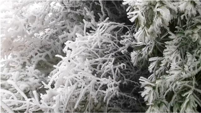 武当山下2020年的初雪了的雪后武当山的雾凇雪景3