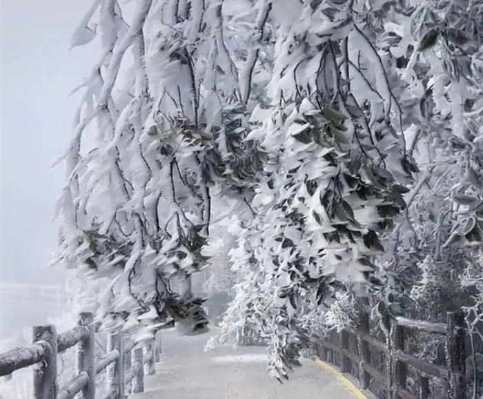 五指峰上如精雕般的雾凇雪景