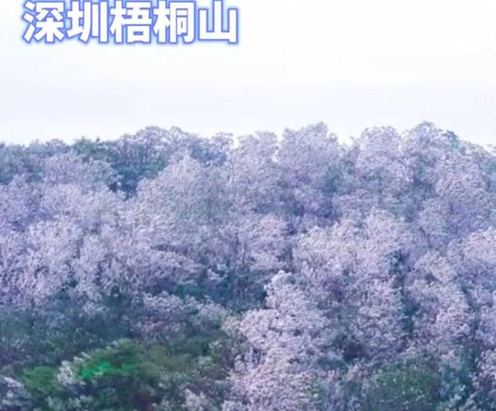 广东深圳梧桐山的雾凇雪景