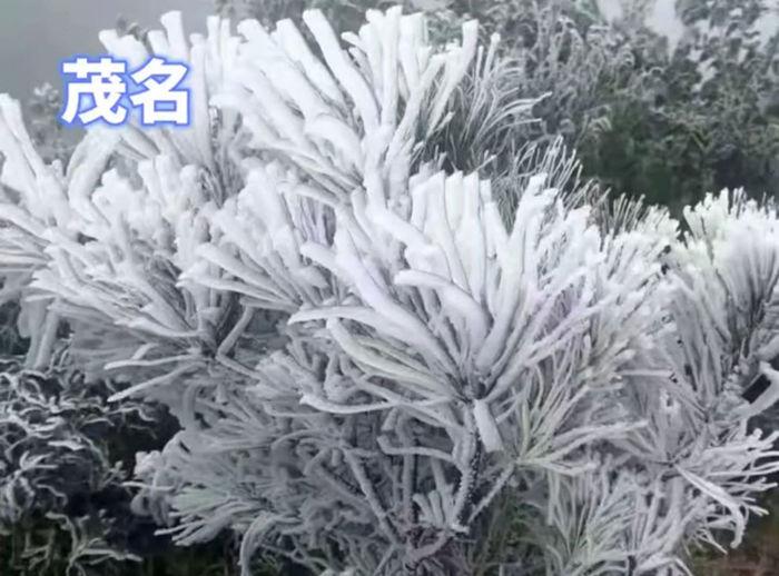 广东茂名的雾凇雪景