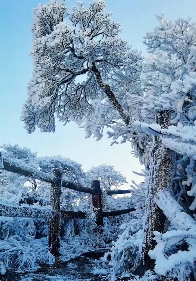 华南之巅猫儿山雾凇雪景奇观,简直不要太美了!