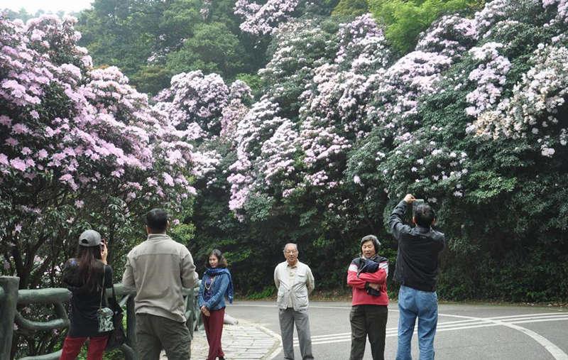 游客拍摄桐山十里杜鹃花海留念