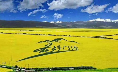 西北青甘大环线自驾游线路--门源县油菜花海