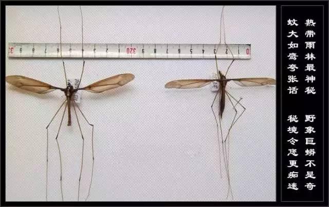 云南十八怪之第三怪:三只蚊子一盘菜