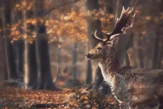 秋天旅游摄影技巧 一、构图原则