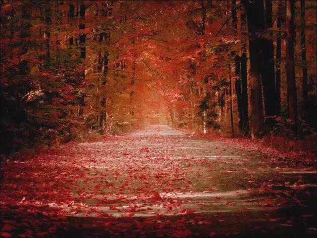 秋天旅游摄影技巧二、光线运用