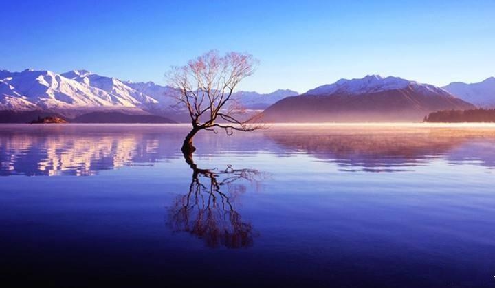 带你去看神奇的世界:新西兰最孤独的一棵树--瓦纳卡之树